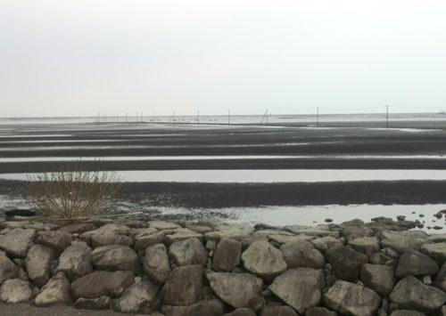 1.島原湾の不思議な電線
