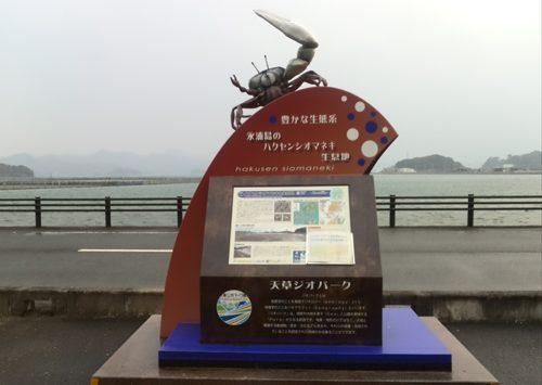 7.永浦島ハクセンシオマネキ